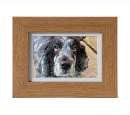 All-Pets-Micro-Frame-357x317