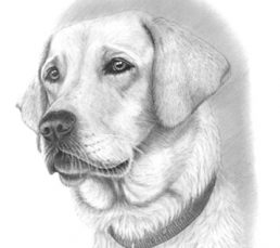 Pencil-Portrait