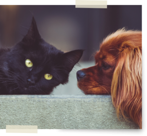 How Much To Cremate A Dog or Cat? Click Here For Pet ...